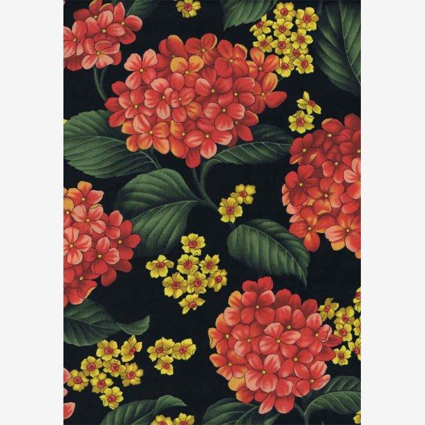Røde hortensia på sort