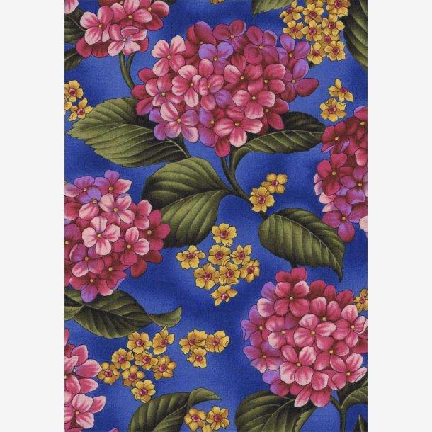 Pink hortensia på blå