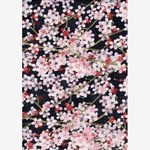 Kirsebærblomster på sort