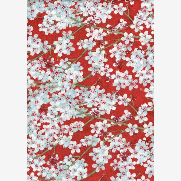 Kirsebærblomster på rød